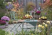 Kleine Holzterrasse mit Ziegelmauer : Chrysanthemum