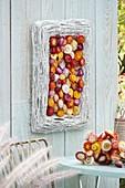 Bilderrahmen aus weiss gefaerbten Weinranken mit Blüten von Xerochrysum