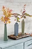 Schlanke Vasen mit Zweigen vom Japanischen Fächerahorn