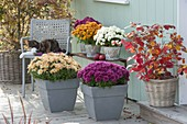 Chrysanthemen-Terrasse