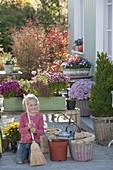 Grünen Holzkasten mit Chrysanthemen bepflanzen