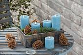 Holzkasten mit 4 blauen Kerzen , Zapfen von Pinus (Kiefer), Moos