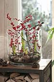 Großes Glas gefüllt mit Hippeastrum (Amaryllis) dekoriert mit Zweigen