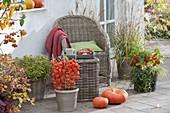 Herbst-Terrasse mit Physalis (Lampionsblume) an Spalier gezogen