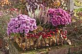 Chrysanthemum (Herbstchrysanthemen) und Calluna vulgaris 'Twin-Girls'