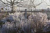 Bauerngarten-Beet mit gefrorenen Stauden vor Holzzaun