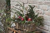 Weihnachtlicher Korbkasten mit verschiedenen Koniferenzweigen