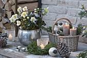 Weihnachtliches Arrangement mit Helleborus niger (Christrose)