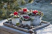 Kleine Emaille-Töpfe mit roten Kerzen und Apfel (Malus) auf Holz-Untersetzer