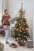 Koreatanne als lebendiger Weihnachtsbaum im Zimmer