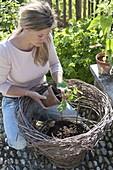 Frau pflanzt Sommerblumen in selbstgemachten Weidenkorb