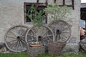 Olivenbäumchen und alte Wagenräder