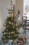 Abies koreana (Koreatanne) als lebender Weihnachtsbaum geschmückt