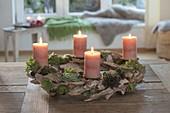 Adventskranz aus Treibholz mit Sempervivum (Hauswurz, Dachwurz)