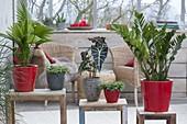 Gruenpflanzen als Raumteiler auf Beistelltischchen