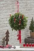 Hedera helix (Efeu) als Kugel-Ampel gezogen, weihnachtlich dekoriert