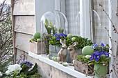 Ostern auf der Fensterbank : Feldsalat (Valerianella), Kresse (Lepidium)