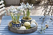 Iris reticulata 'Katherine Hodgkin' (Netziris) in Bunzlauer Geschirr