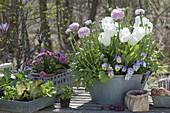 Frühlings-Arrangement auf Terrassen-Tisch : Ranunculus (Ranunkel)
