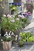 Frühlingsterrasse : Ranunculus (Ranunkeln), Anemone (Buschwindröschen