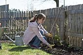 Frau bepflanzt Beet am Zaun mit Beerenstraeuchern