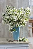 Blühende Zweige von Malus (Zierapfel) in blauer Vase
