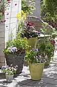 Arrangement aus grünen Toepfen und Korb mit essbaren Pflanzen