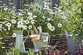 Leucanthemum vulgare (Margeriten) und Centaurea montana (Flockenblume)