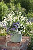 Holzkuebel mit Argyranthemum frutescens (Margerite), Brachyscome