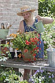Rot - orange bepflanzter Keramiktopf