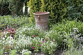Weisses Beet mit Salvia nemorosa 'Schneehuegel' (Steppensalbei, Ziersalbei)