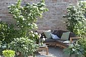 Grün - weisse Kiesterrasse mit Sitzecke : Cornus kousa var. chinensis