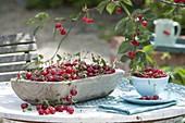 Frisch gepflueckte Sauerkirschen (Prunus cerasus) in Holzschale und Tasse