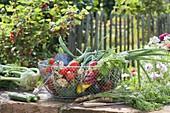 Drahtkorb mit frisch geerntetem Gemüse : Zucchini (Curcurbita pepo)