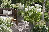 Mit Sonnensegel schattierte Terrasse mit weissen Pflanzen, Lounge-Ecke