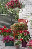 Rot bepflanzter Balkon mit rotem Stuhl : Calibrachoa 'Vulcano'