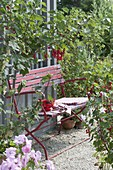 Bank zwischen roten Johannisbeeren (Ribes rubrum) auf Kiesterrasse