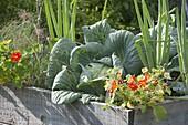 Selbstgebautes Hochbeet aus Brettern mit Gemüse