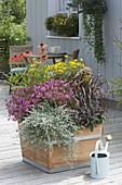 Holz-Kasten mit Stauden und Sommerblumen : Coreopsis 'Limerock Passion'