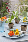 Tischdeko mit Tropaeolum (Kapuzinerkresse) und Calendula (Ringelblumen)
