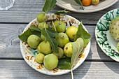 Frisch gepflueckte Feigen (Ficus carica) auf Keramik-