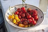 Gelbe und rote Tomaten (Lycopersicon) in Schale