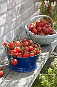 Frisch geerntete Tomaten (Lycopersicon) in Emaille-Schüssel und Spankorb