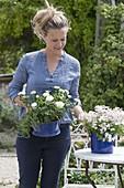 Frau bringt weisse Blumen in blauen Emaille - Toepfen