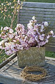 Rustikaler Topf mit Zweigen von Prunus 'Accolade' (Zierkirsche