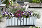 Fahrbahrer Holzkasten mit Balkonpflanzen : Petunia 'Crazytunia Starlight Blue'