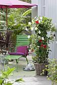 Zimmerpflanzen und Kuebelpflanzen auf Balkon mit rotem Sonnenschirm