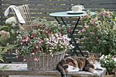 Korb bepflanzt für den schattigen Balkon
