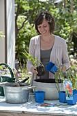 Frau bepflanzt Mini-Teich mit Schizostylis coccinea