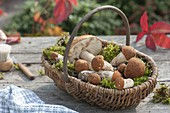 Fresh, self-searched forest mushrooms in the basket